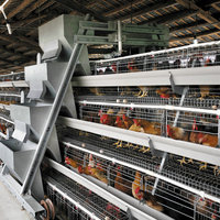 Henan Poultry Farming Project Chicken Cage