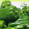 /product-detail/fresh-green-sweet-habanero-peppers-export-price-60020663314.html
