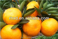 2016 Fresh Fruits - Mandarin Orange for Pakistan/fresh citrus fruit