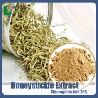 Lonicera japonica Extract Honey Suckle chlorogenic acids 20% HPLC