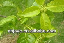 Natural herb Rauwolfia Serpentina Extract 5:1 10:1