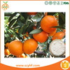 Natural plant extract Orange Extract Pure Diosmin CAS520-27-4