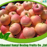 chinese red delicious gala apple lowest price best quality