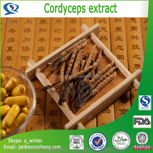 100% natural & pure tibet dried cordyceps extract benefits