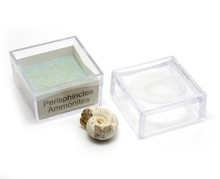 magnifier box fossils set wholesale ammonite