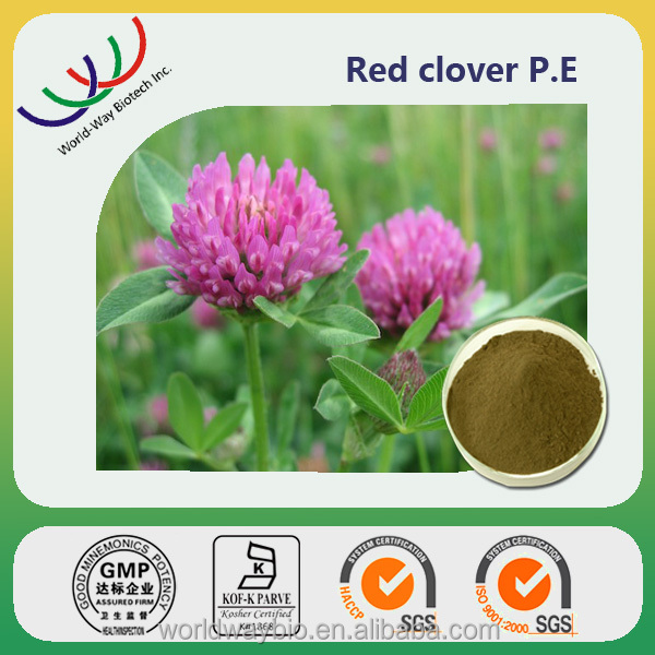 Red clover extract biochanin a,red clover extract powder isoflavone,Clover blossom extract