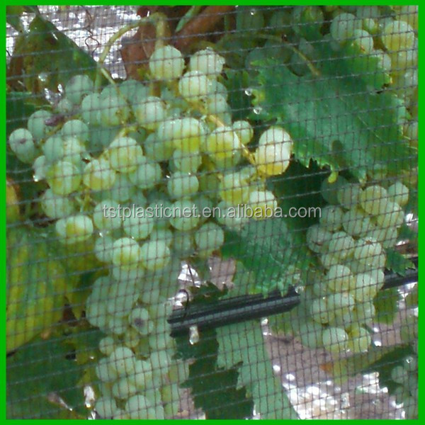 Grape Orchard Anti Hail Netting with UV Protection