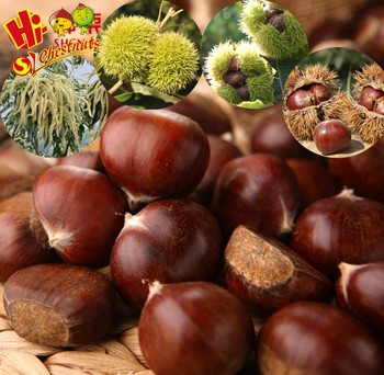 Chinese Chestnut Price Per Kg Mesh Bag Chestnuts