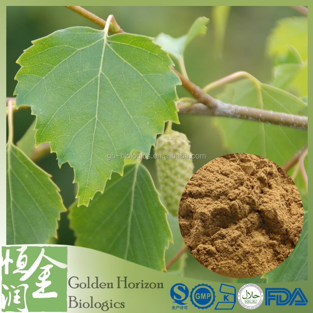 All Natural Certified Birch Leaf P.E. Extract