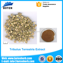 hot sale & high quality tribulus terrestris extract powder 60 saponins With Good Service