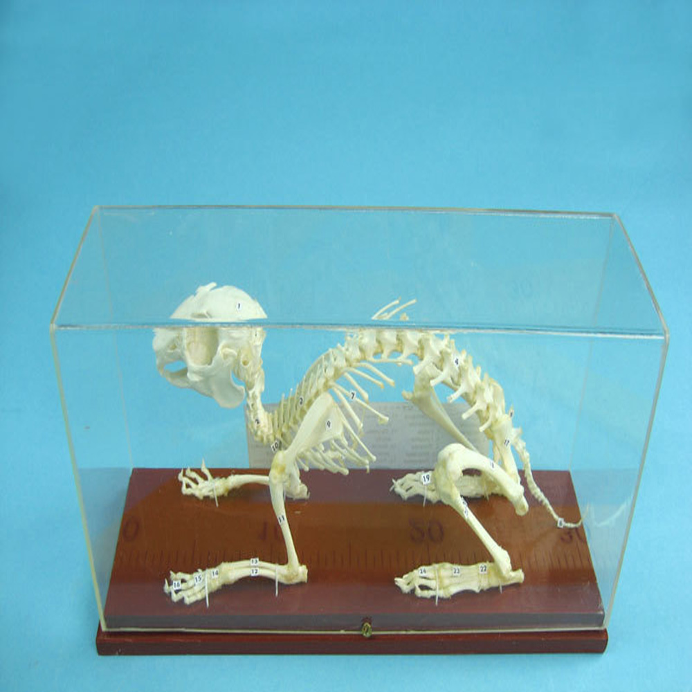 Biology Teaching Aids Anatomical Bas Relief Model of Human Liver