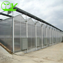 Tomato plastic sheet polycarbonate greenhouse
