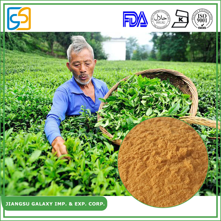 Factroy supply total polyphenols 50% water soluble egcg green tea plant extract