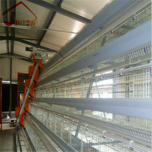 Open House Automatic chicken Battery Cage System