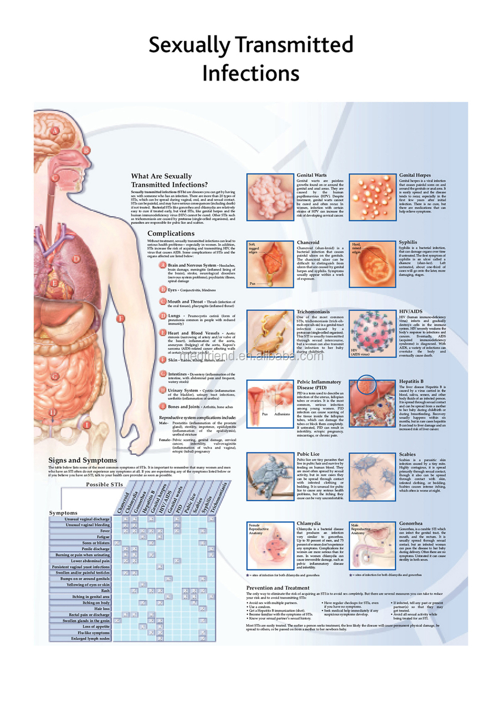 3D Medical Chart-The Vascular System and Viscera