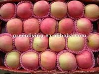 fuji apple good quality and papular in the world (100-113 125-198)