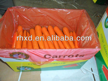 Hot selling carrot price with great price