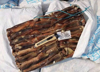 High Quality Illex Argentina Squid