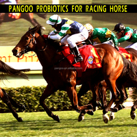 The horse probiotic enzymes nutritional additives