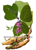 100% Natural Pueraria Mirifica Extract