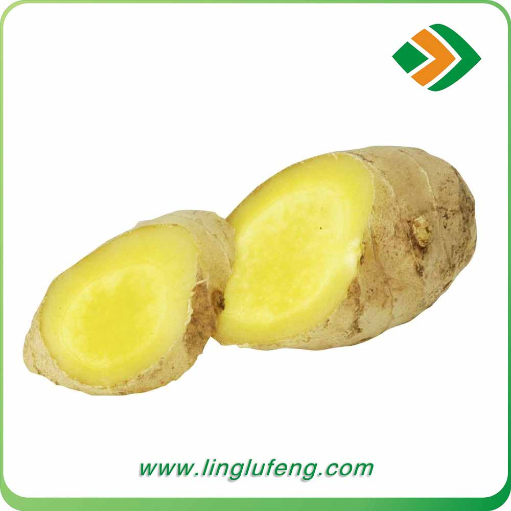 ISO certification export price of fresh organic ginger