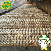 2018 hot sale wholesale oyster mushroom spawn grow bags