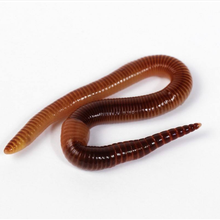 wholesale Dried Earthworm for Fish Feed