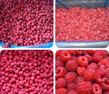 China 2016 new crop IQF frozen red raspberry for export