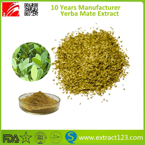 High Quality Yerba Mate Wholesale