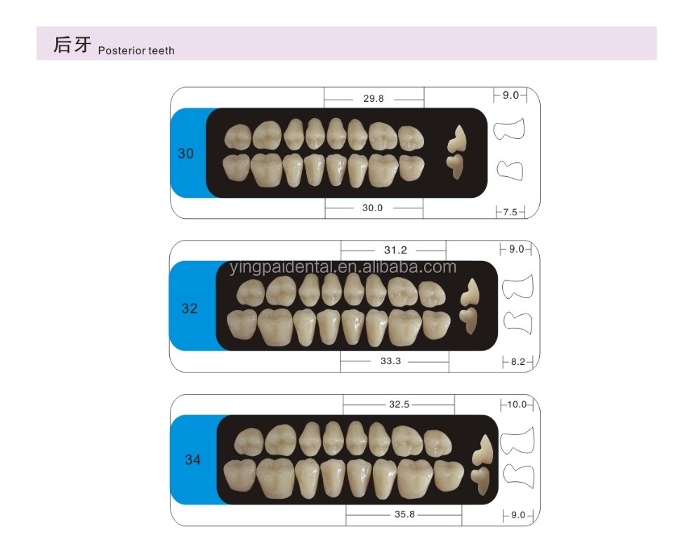Manufacturer of synthetic resin teeth/acrylic teeth/resin teeth with CE and ISO certification