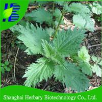 Buy stinging Nettle Leaf Tea in China on Alibaba.com