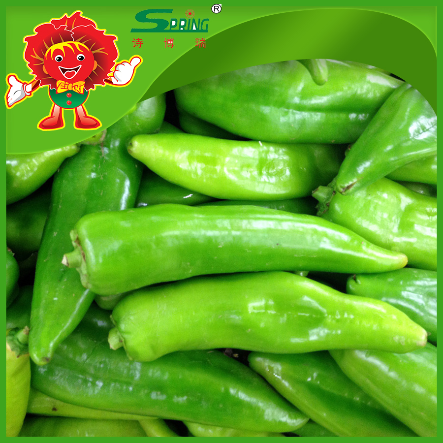 Fresh green chilli ready for export