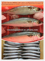Frozen mackerel fish,chub mackerel(pacific mackerel),Saba