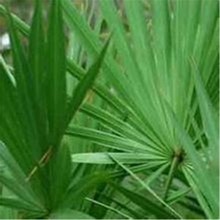 Favorable price best quality Saw Palmetto Fruit , free sample for initial trial, in bulk stock
