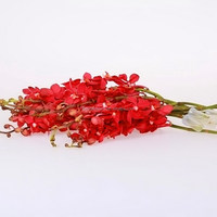Fashion fresh preserved red butterfly orchid