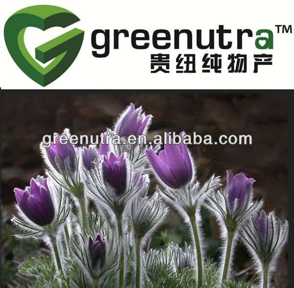 GMP Anemone Root Extract/Pulsatilla chinensis Extract