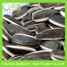 2017 Crop High Quality big black Sunflower seed 5009 24/68 type