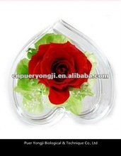 fresh preserved roses in glass