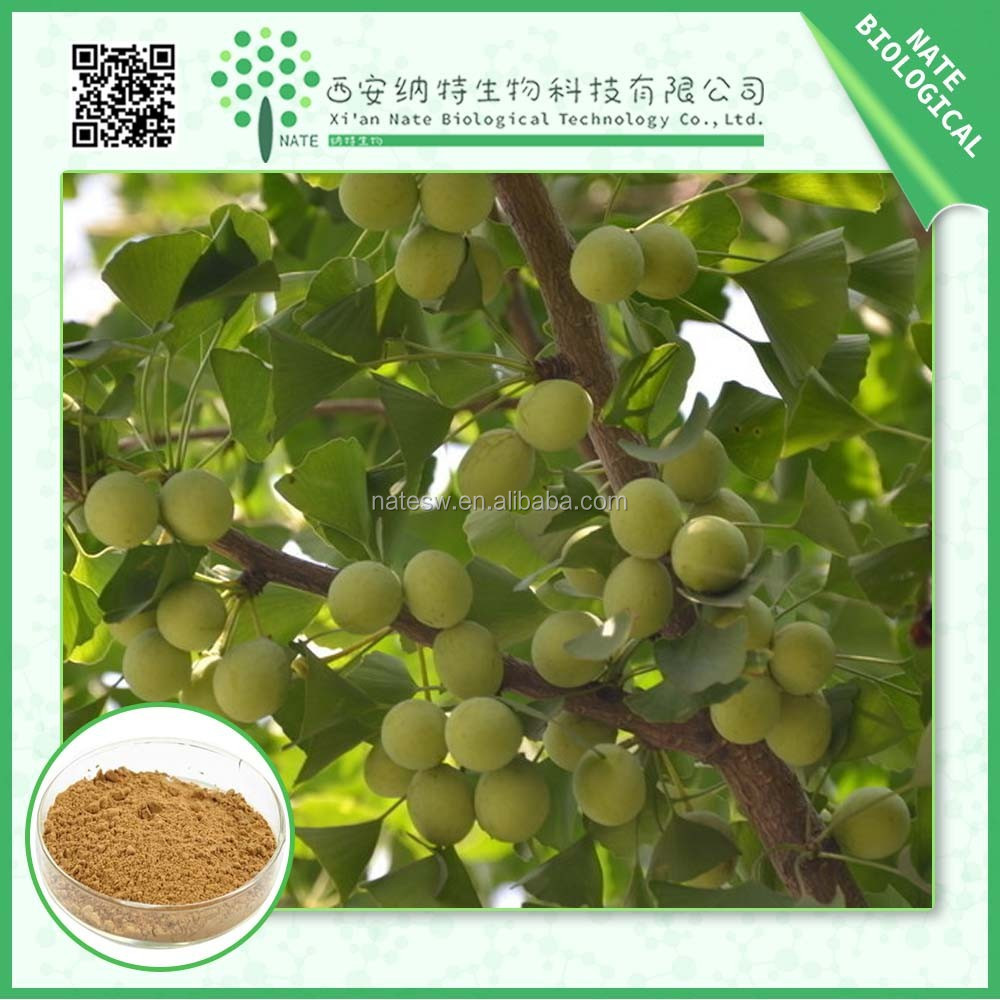 Best Quality Ginkgo Biloba Extract 24 % Ginkgo flavonoid by HPLC