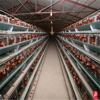 layer egg chicken breeding cage/poultry farm house design