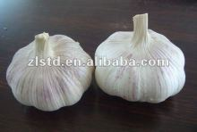 GARLIC PRICE 2013, hot sale