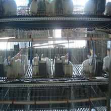 Rabbit Cage(ISO9001) at Low Price