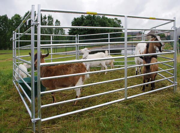 Cattle Livestock Farm Fence Panels