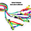Pet Leash Harness Set Colour Profusion High Quality Strong Durable Nylon Puppy Cat Rabbit Kitten Pull Dog Harness and Leash Set