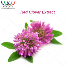 Free sample ! China 16 years experience factory organic herbal powder Trifolium pratense extract ,red clover extract isoflavones