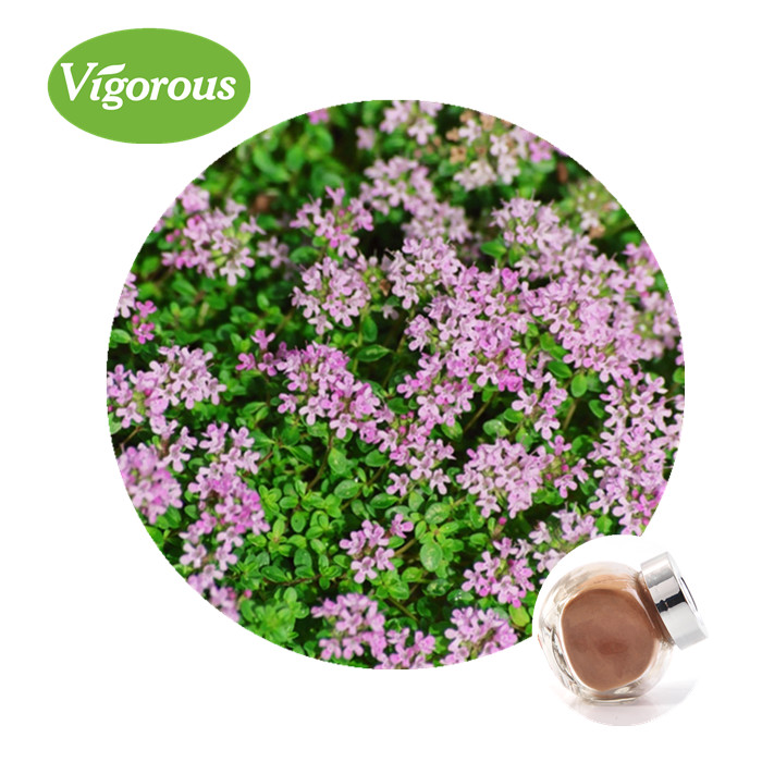 Free smaple thyme extract Thymus Vulgaris L extract powder