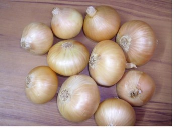 "yellow onions "" Fitila"""