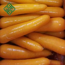 carrot lowest price fresh carrot cheap price