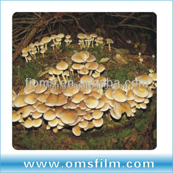 Hot sale greenhsoue film for mushroom