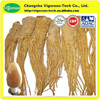 pure natural Dong Quai Extract / high quality angelica sinensis extract / best price angelica sinensis